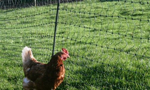 Green Electric Poultry Netting